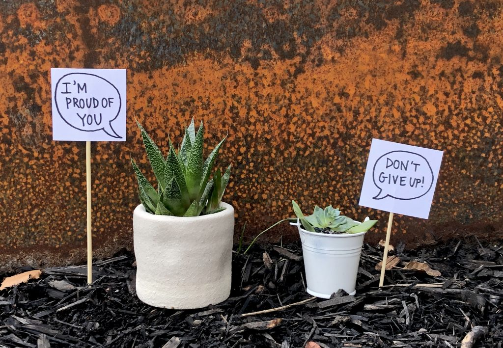 "2 potted succulents next to each other that have speech bubbles next to them. The one on the left reads ""I'm proud of you"" and the right reads ""Don't give up"""