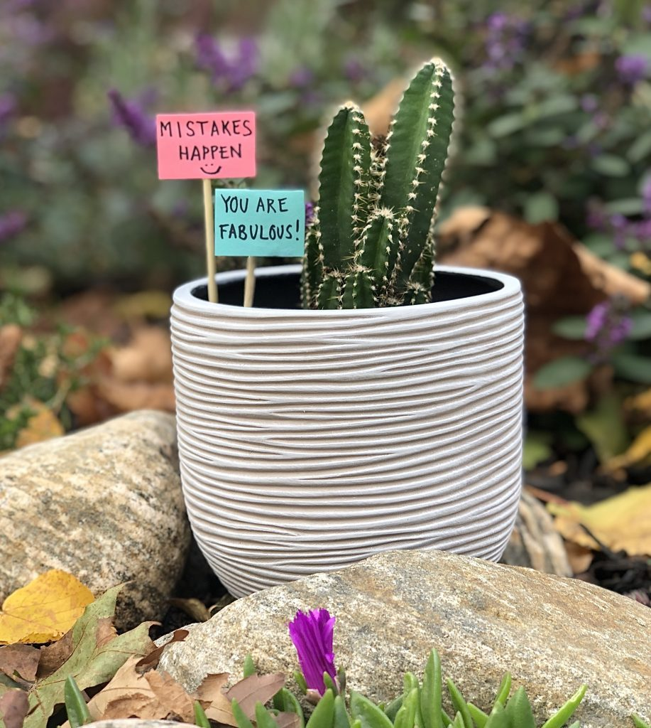 "cactus with two signs stuck into its pot that read ""mistakes happen"" and ""you are fabulous"""