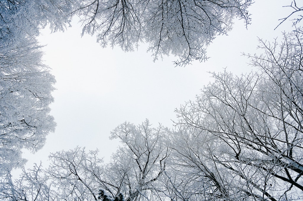 seen of treetops covered in snow with the sky peeking out from behind their gap