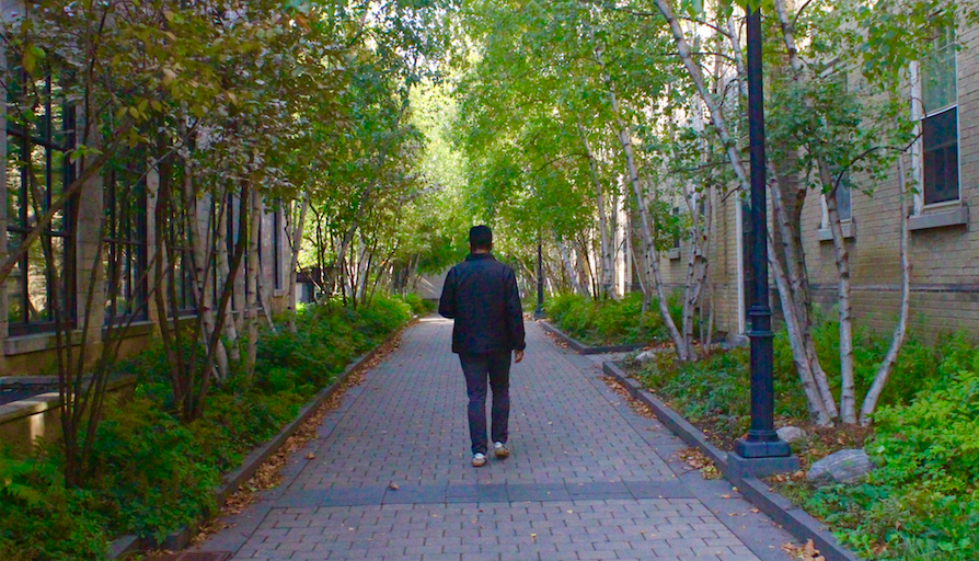 man walking down U of T walkway surrounded by trees