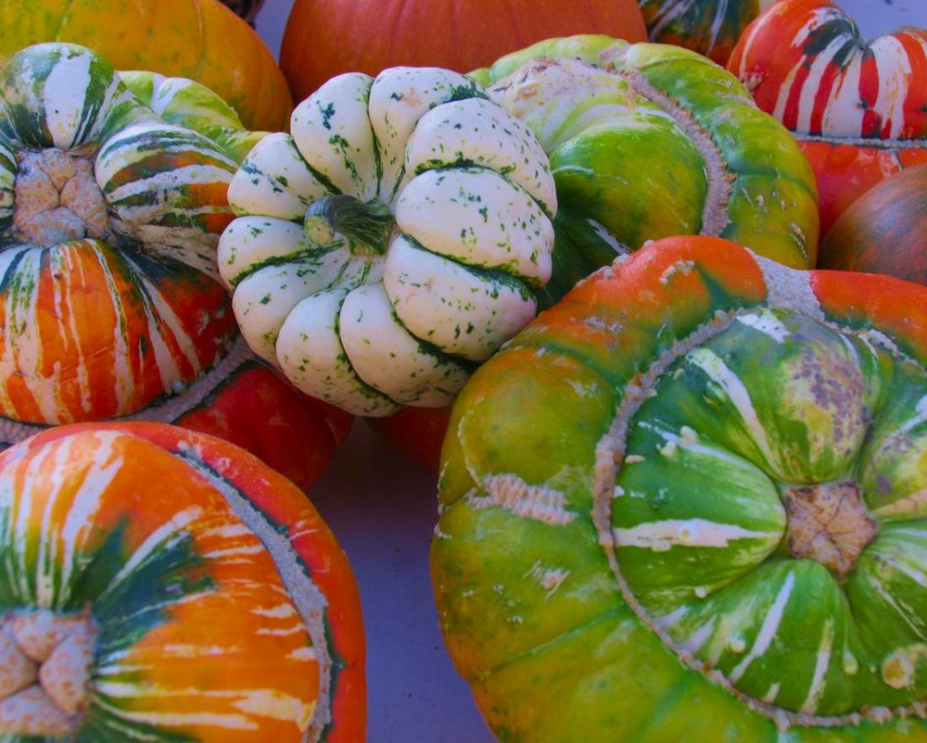 Image of green, orange, and beige speckled gourds.