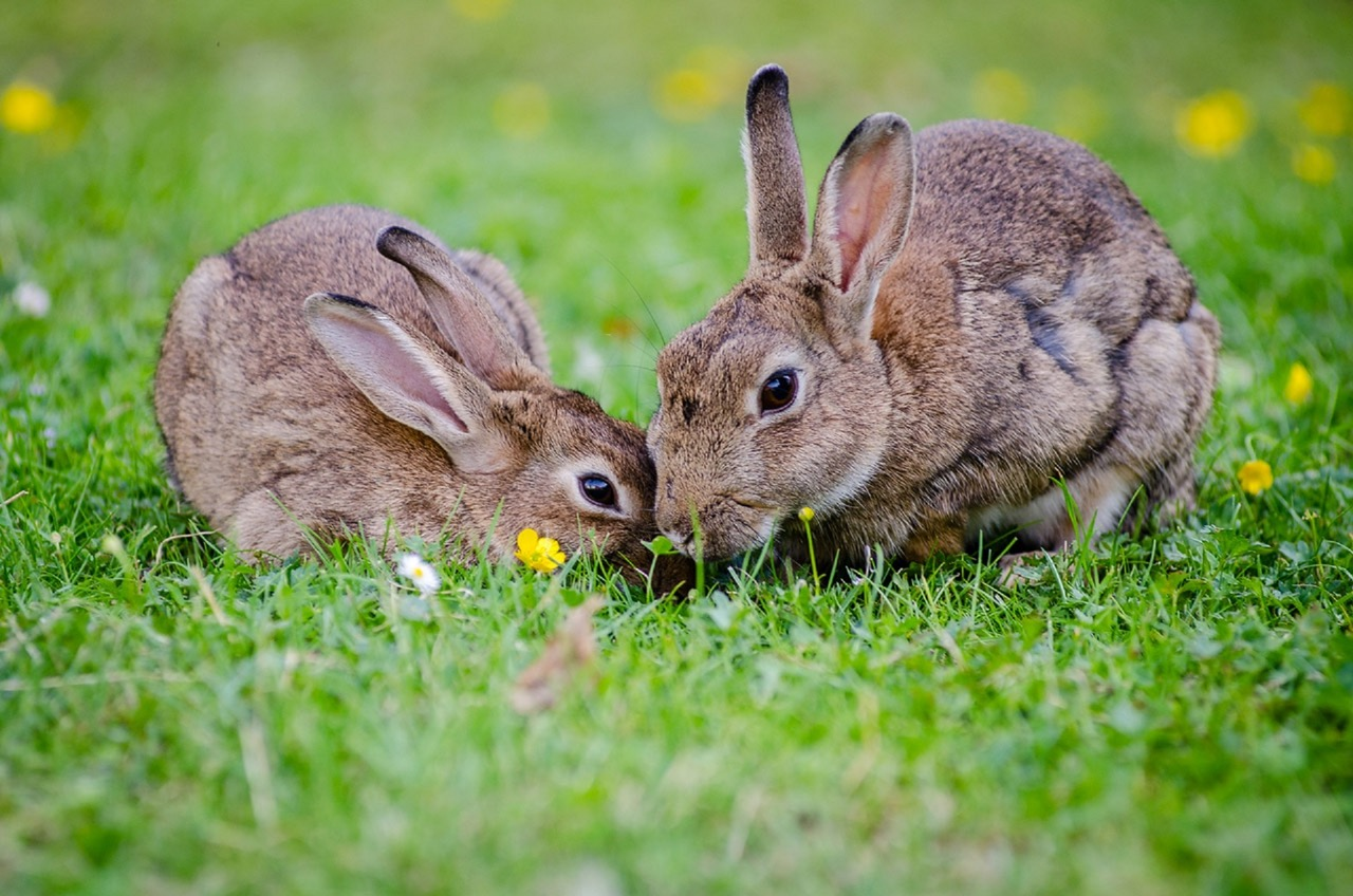 european-rabbits-bunnies-grass-wildlife