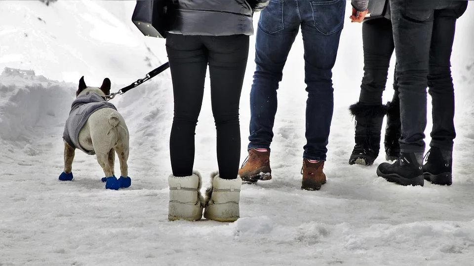 4 people standing on a snowy ground with winter boots on and a dog on a leash with paw covers on