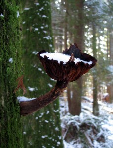 Mystery Rainforest Mushroom.