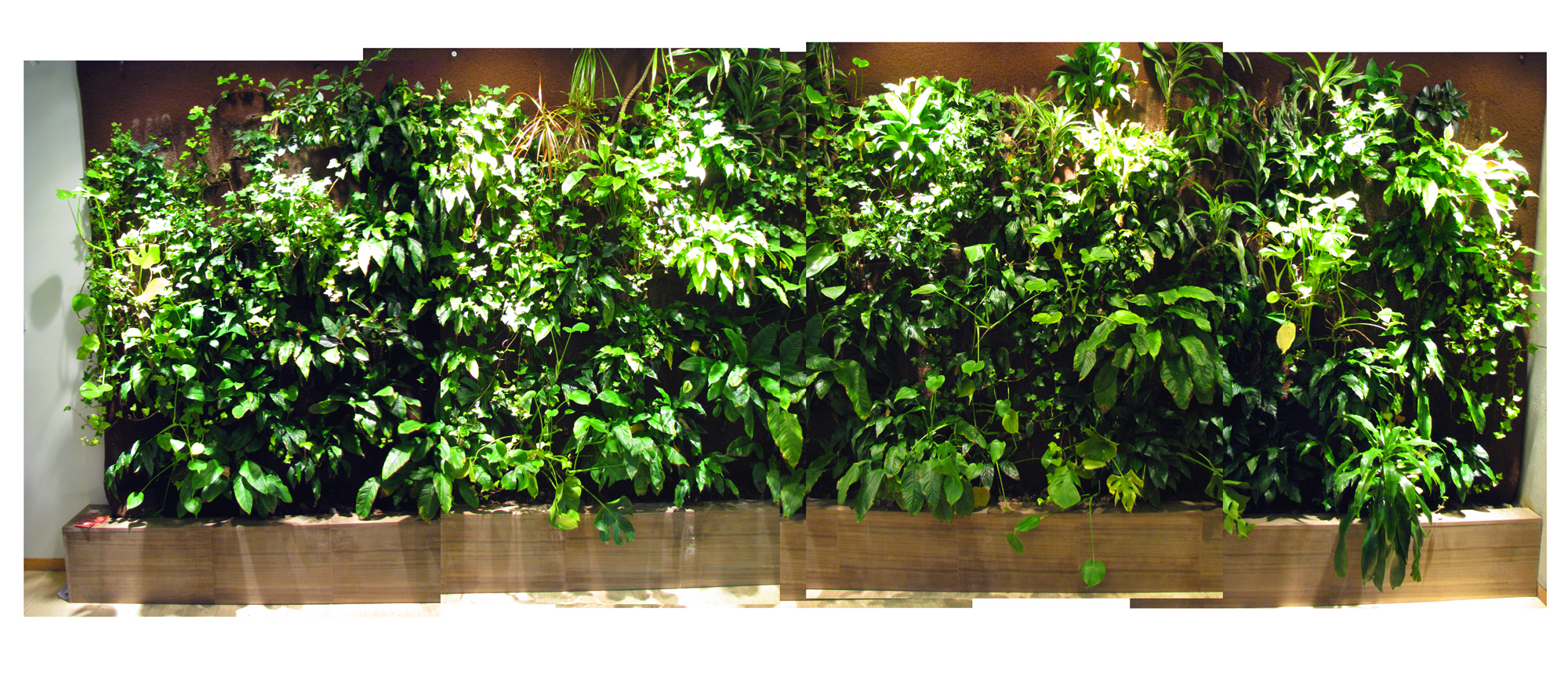 University of Toronto's Living wall