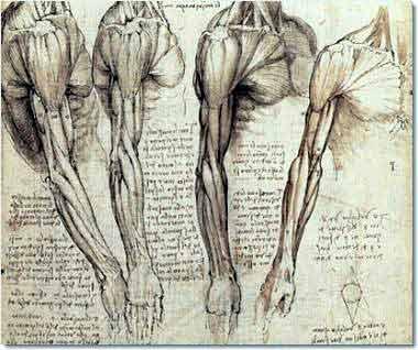 An original Leonardo da vinci sketch; an essay is much the same, no? (Courtesy of QOUT blog)
