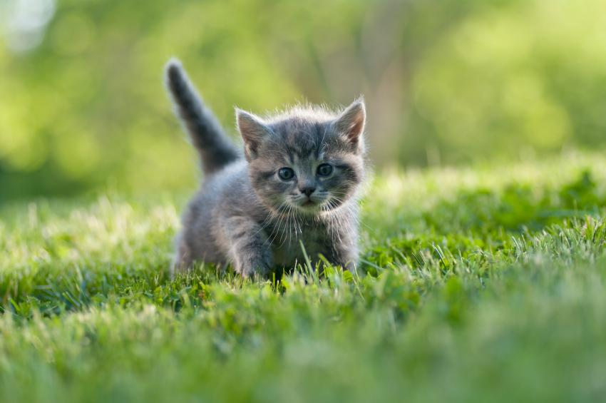 Bonus strategy: looking at pictures of kittens or your cute animal of choice!