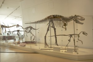 The first bit of science writing I ever did involved hanging out with the ROM dinos! (via thevarsity.ca)