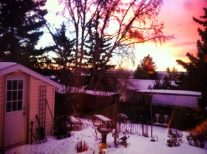 My backyard garden with a view out across a river valley, with a blanket of snow, and all lit in a pink glow of a winter sunrise