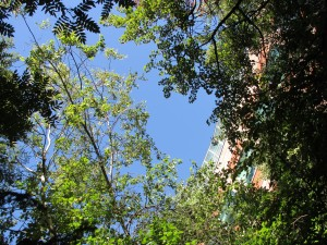 Looking straight upwards at the big blue sky, through foliage and campus buildings