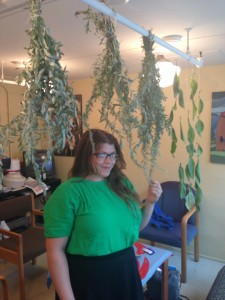 NSA Marten Clan Leader Paige standing amongst sage and tobacco leaves hanging to dry in the NSA office