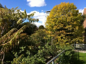 Looking our from a small ridge towards the dense foliage of Philosopher's Walk, with a gleaming tower in behind