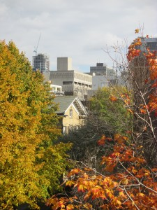 Looking East over the red and yellow trees of St. George Street  towards some of U of T's largest and craziest buildings all stacked on top of each other
