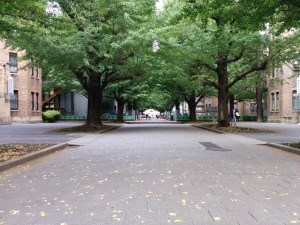 A tree-lined corridor at the entrance of the University of Tokyo's Hongo Campus. Buildings made of light brick can be seen on both sides of the corridor.