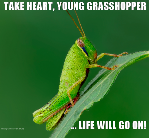 Take heart, young grasshopper, life will go on!