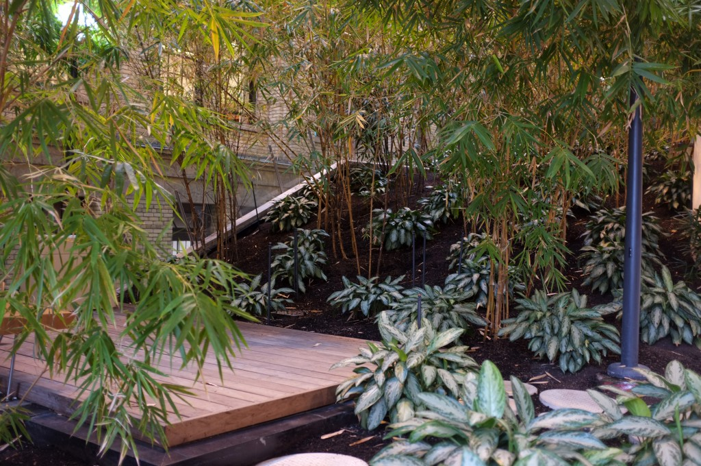 bamboo garden at the donnelly center. there is a wooden platform with a bench surrounded by trees and shrubs.