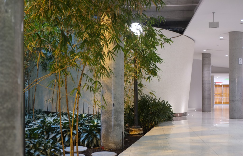 the bamboo garden at the donnely centre. the left side of the image is the garden while the right side is the white hallway.