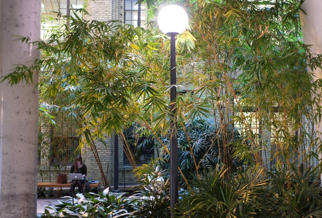 donnelly center bamboo garden. a girl is sittting on a bench in the background. In front of her are trees and shurbs and a lamp post. she is sitting against a light yellow brick wall.