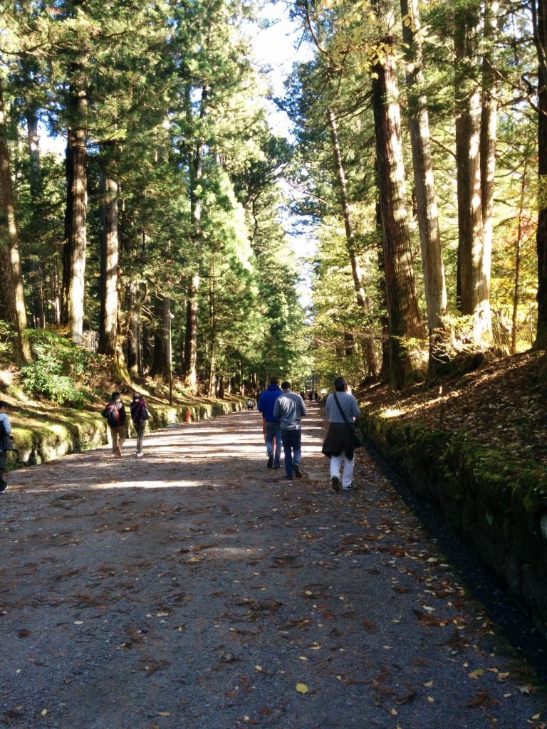 This image shows a tree-lined gravel path.
