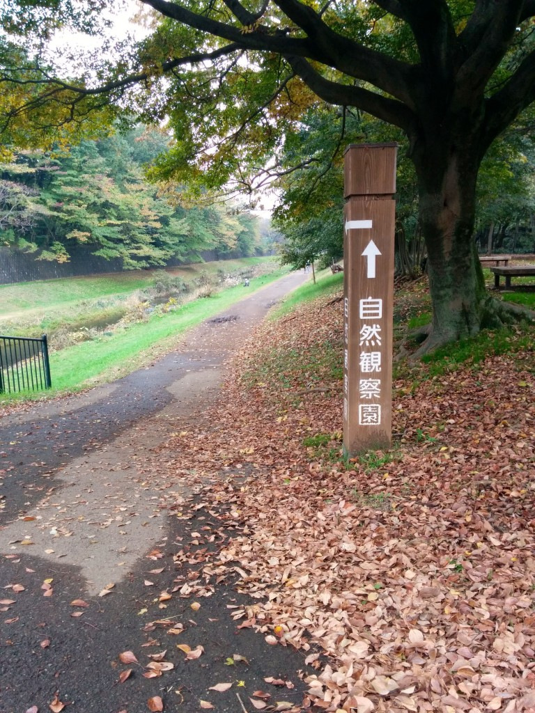 This image shows a concrete path running past a wooden signpost. The signpost features Japanese text that reads, 'natural viewpoint ahead' (shizenkansatsuen).