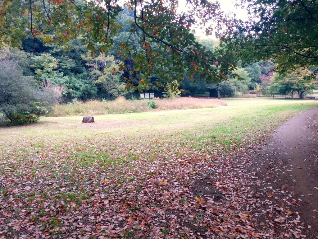 This image shows Nokawa Park in the fall. Brown leafs can be seen on the grass. There are trees in the background. A concrete path can be seen running through the park in the right side of the image.