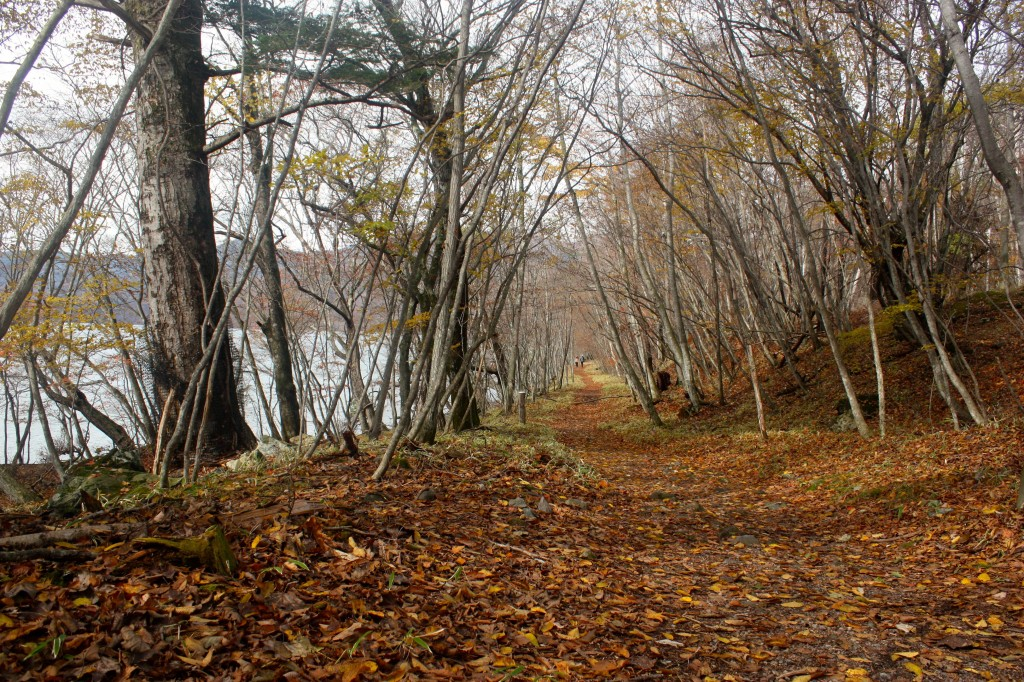 This image shows a lakeside trail. It is lined with bare trees. Dead leaves are on the ground.