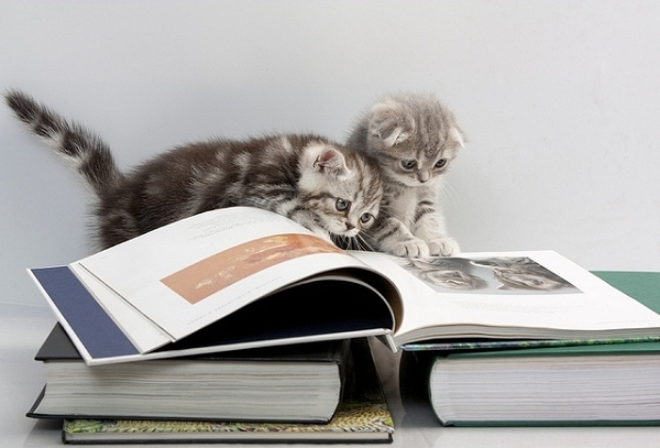 Picture of two adorable grey tabby kittens leaning their heads against one another posing on top of large open textbooks