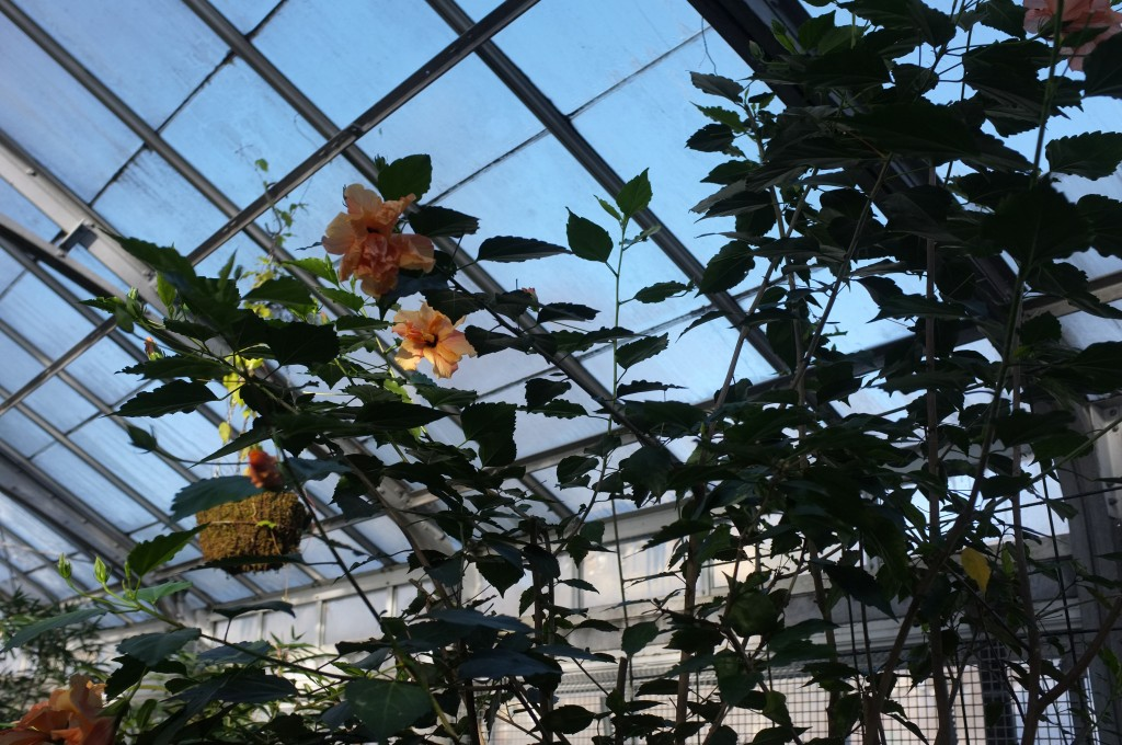 orange flowers bloom on green branches against the blue backdrop of the sky seen through the roof of a greenhouse
