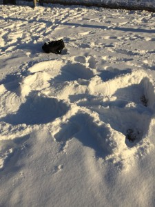 A perfect snow angel in deep snow in the middle of Queen's Park