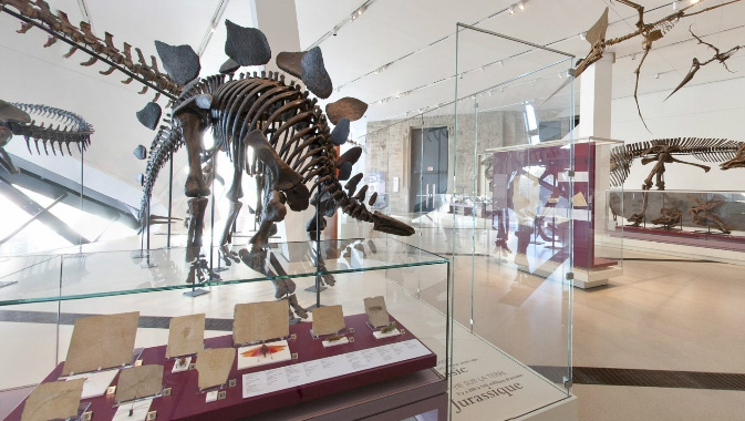 image of inside the rom in the dinosaur room where there are dinosaur skeletons up!