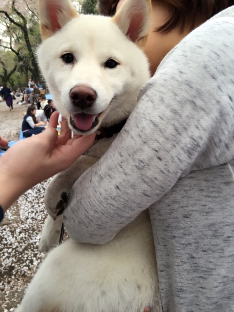 This image shows a close-up of a person holding a white dog in a park.