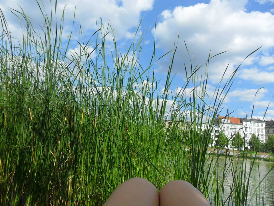 My knees sitting by the pond with tall grass from the water taking up most of the frame and the blue sky with white clouds in the background.
