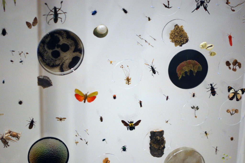 photo of many different insect specimens against a white wall