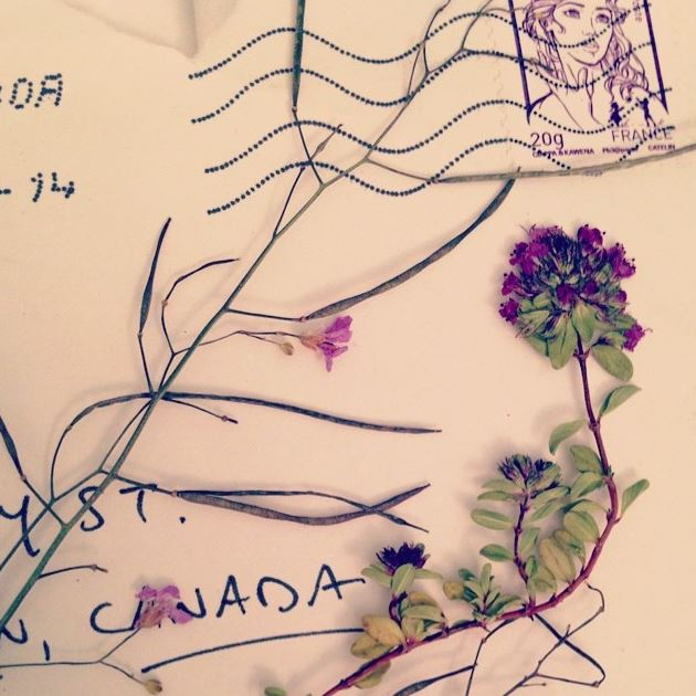 A letter I received from France with beautiful pressed flowers within.