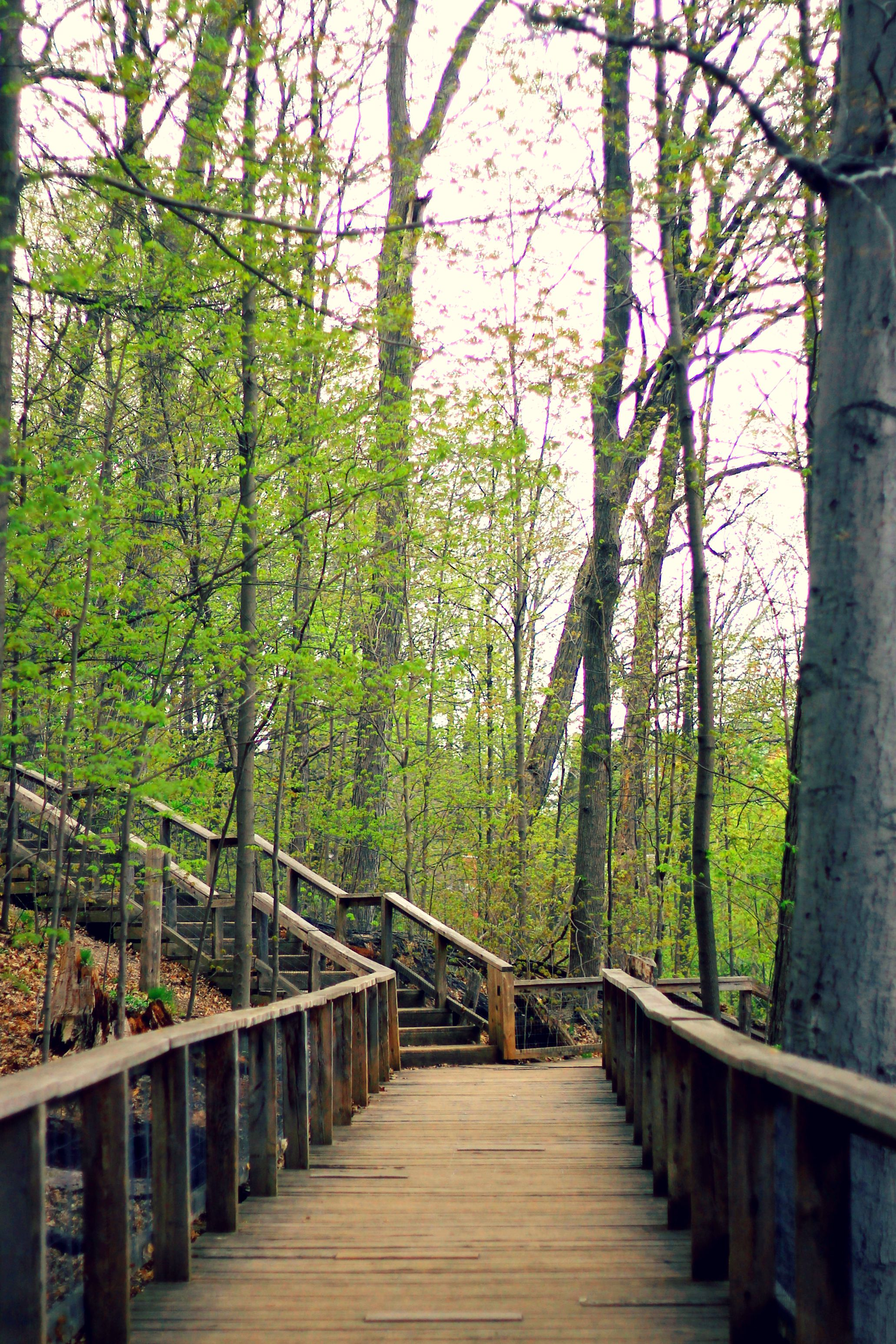 wooden pathway and trees lining sherwood park