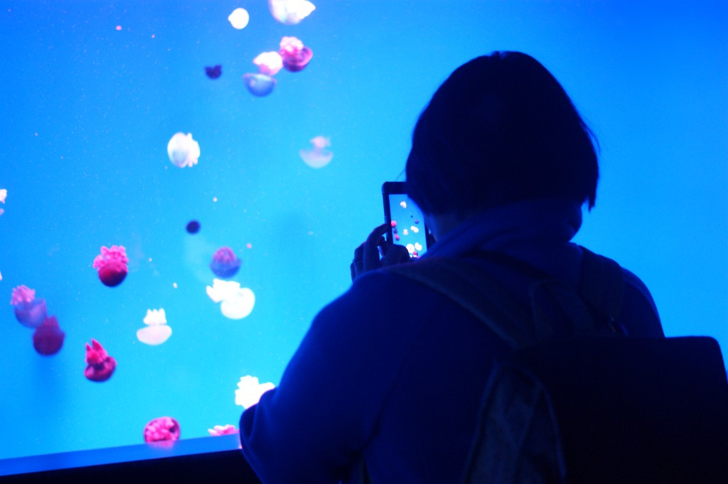 photo of a lady taking a photo of jellyfish. how meta.
