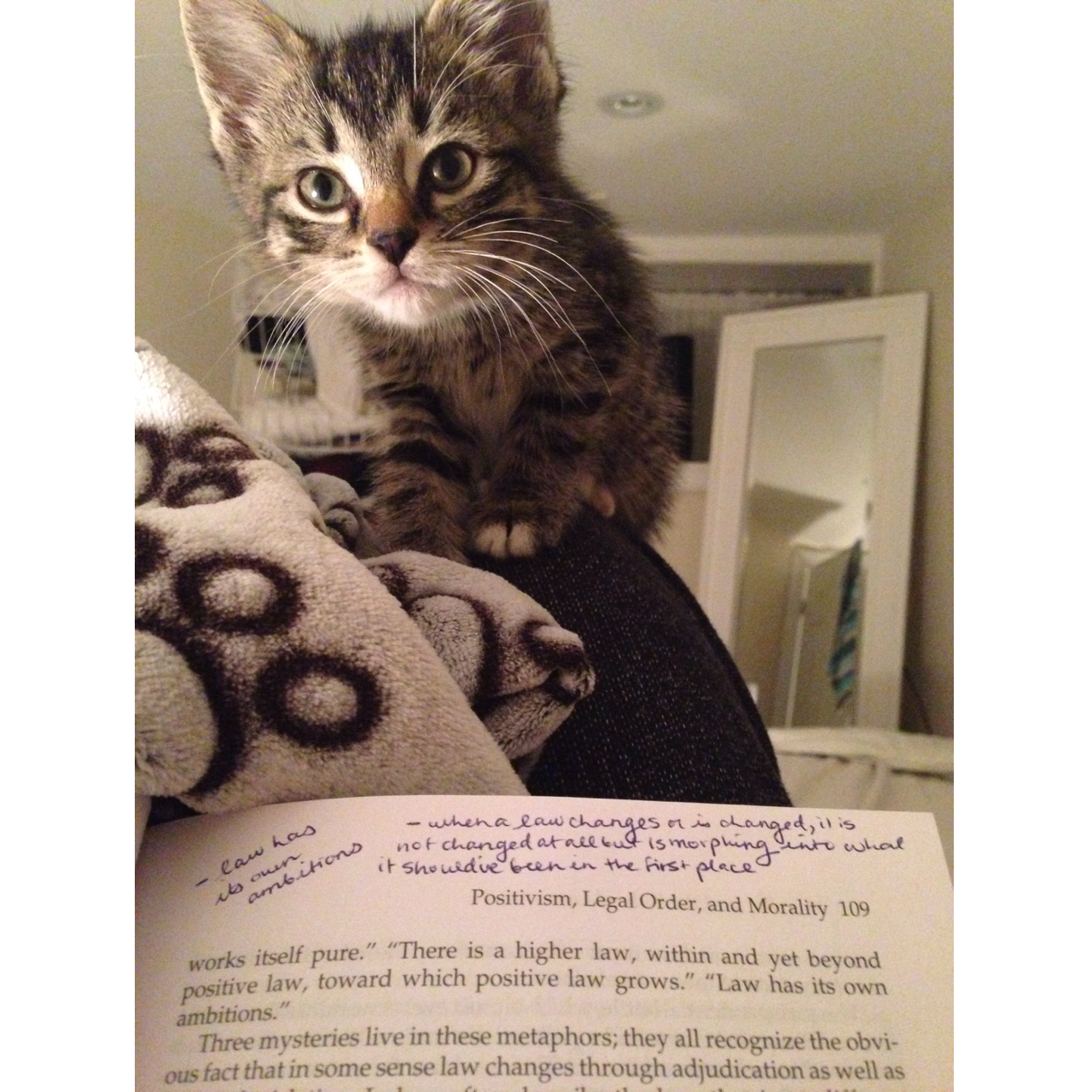 """Little kitten, staring over a book - """"helping"""" with homework."""