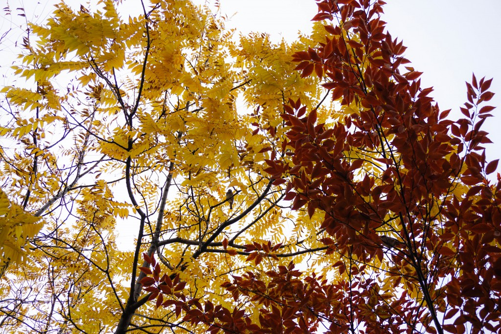 photo of a gold tree and a yellow tree overlapping with a sparrow sitting in the middle