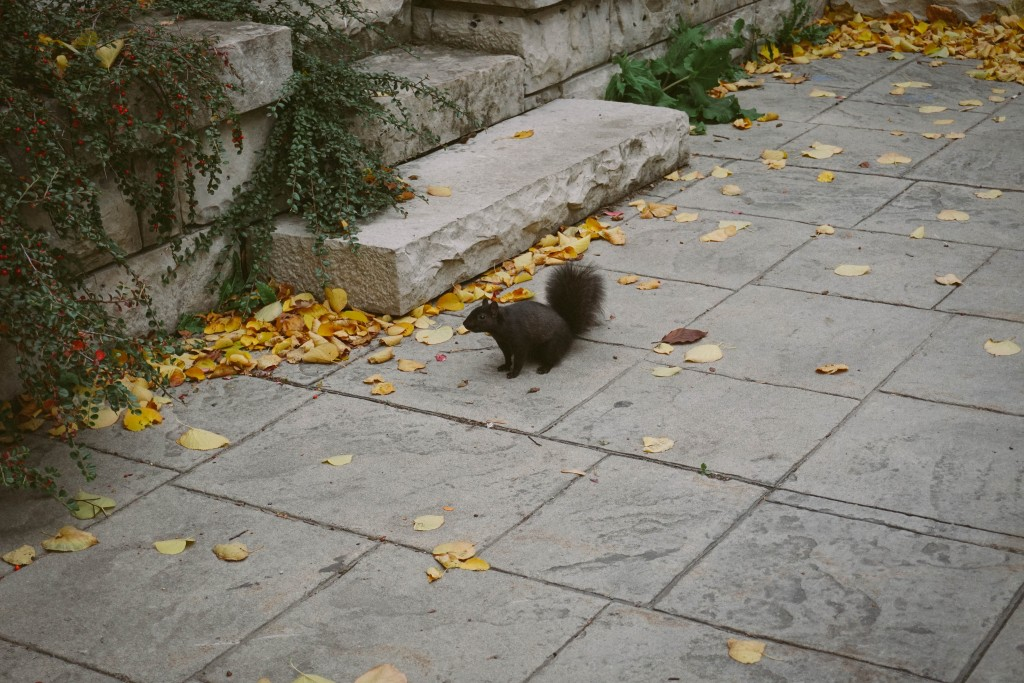 photo of the super cute squirrel who befriended me during my photo taking