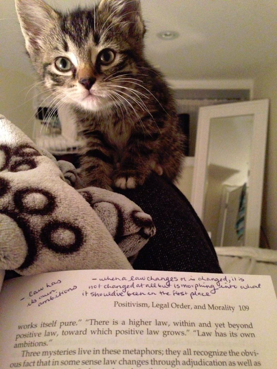 "Little kitten, staring over a book - ""helping"" with homework."
