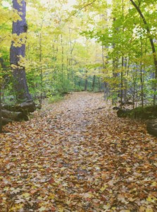 A forest trail covered in leaves.