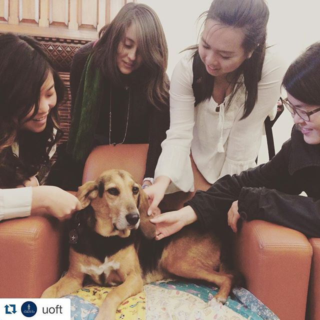 Students petting Bella, the therapy dog at Gerstein library.