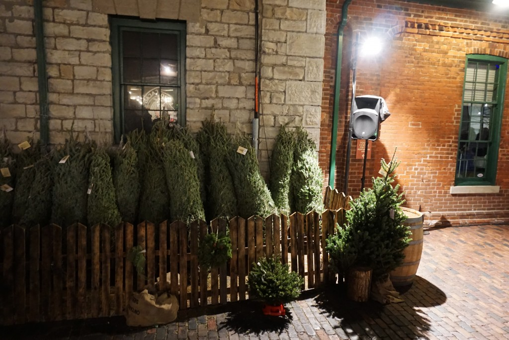 dozens of christmas trees for sale