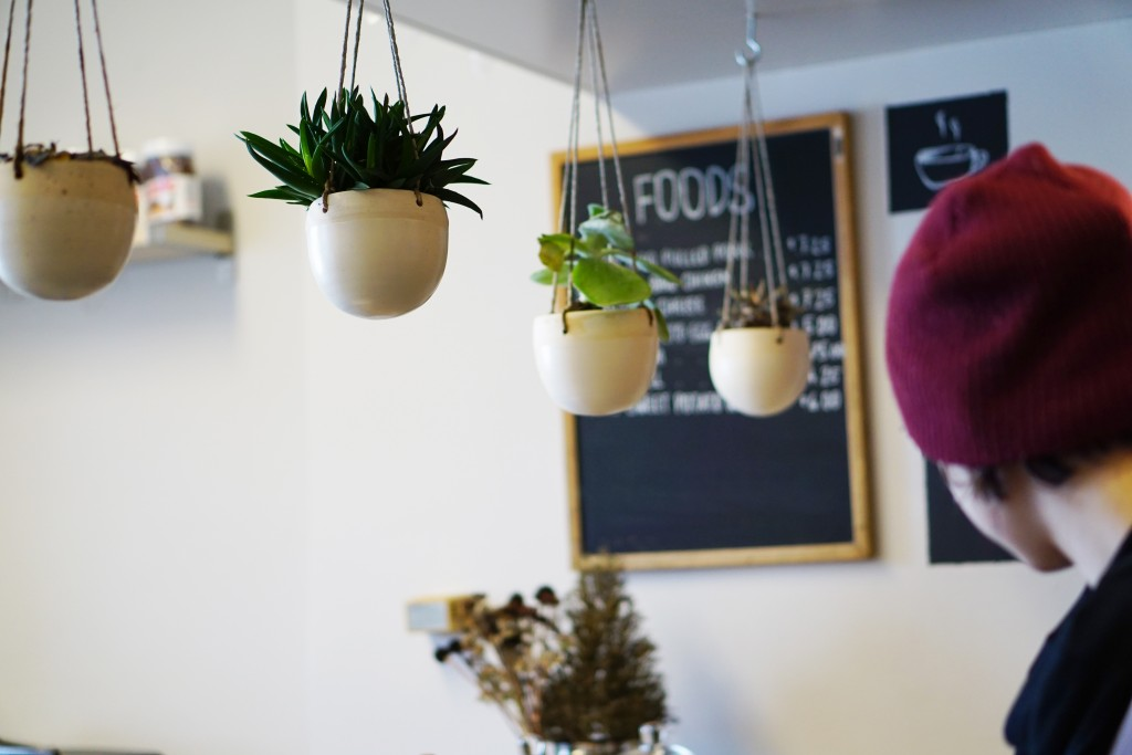 photo of hanging plants above the counter
