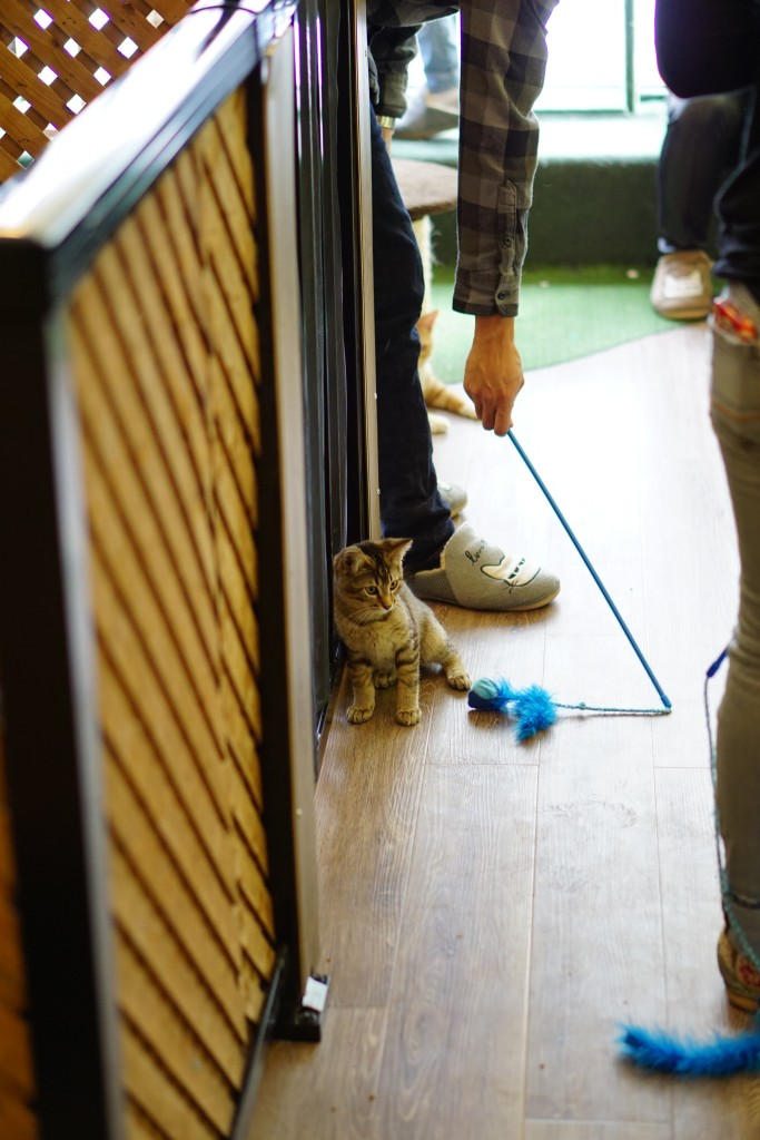 person in cat slippers playing with a tiny kitten