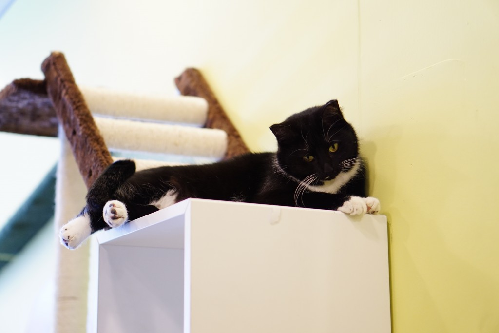 black and white cat lounging on a shelf