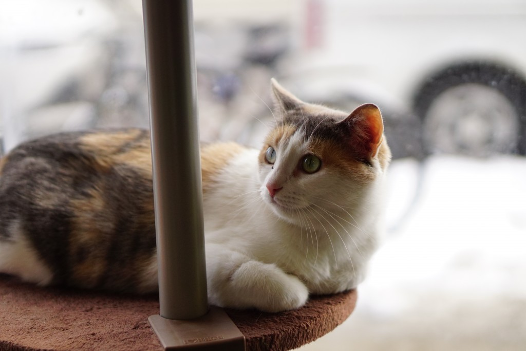 calico cat laying by a window