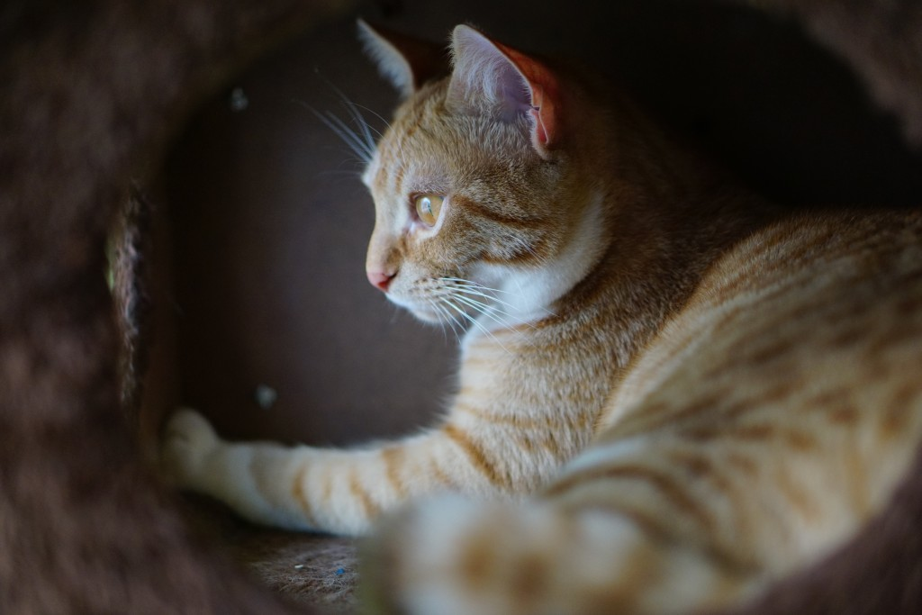 ginger cat in a cat house
