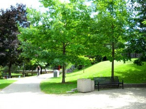 Philosopher's Walk during the summer is a sight for sore eyes. photo courtesy of previous blogger Cynthia