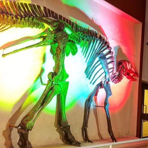Picture of a dinosaur with coloured lights reflected on it